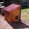 Kutya ház